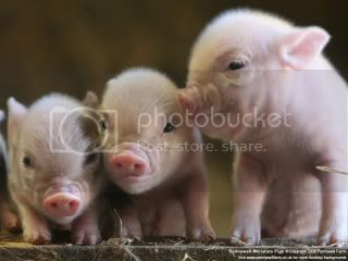 Cute piggies Pictures, Images and Photos